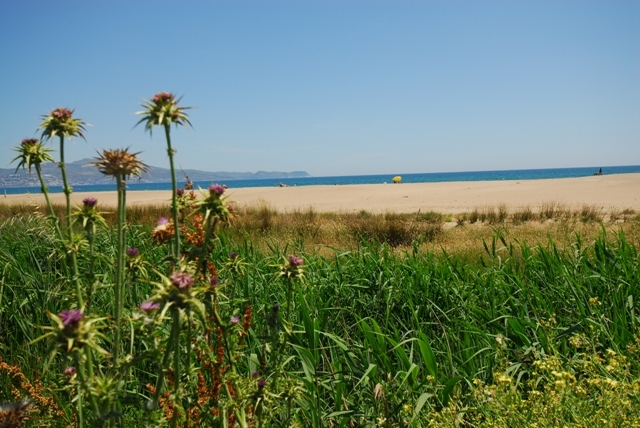 Photo of the environment Camping L'AMFORA in Sant Pere Pescador