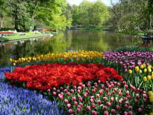Más que tulipanes en Holanda
