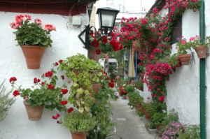 Córdoba florece en mayo