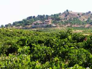 De viñedos por Toro