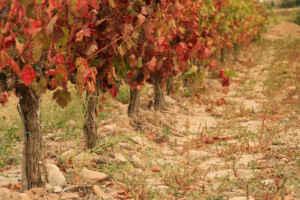 Otoño entre viñedos: el maridaje perfecto en La Rioja