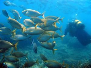 Buceo en una de las reservas más importantes del Mediterráneo
