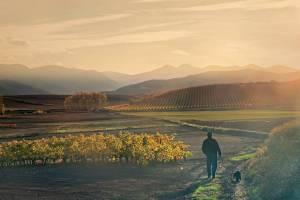 ¿Por qué el camping es el mejor alojamiento para visitar La Rioja en otoño?