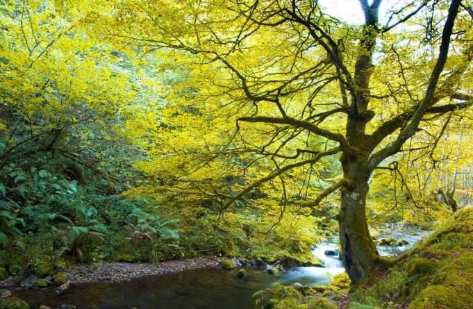 bosque-asturias