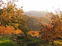 valle-del-jerte