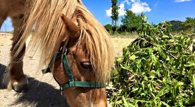pony-camping-serra-pradres