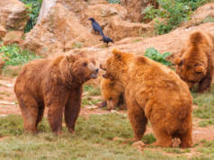 osos cabarceno