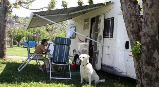 camping-perro