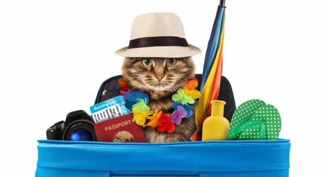 gato-viajero