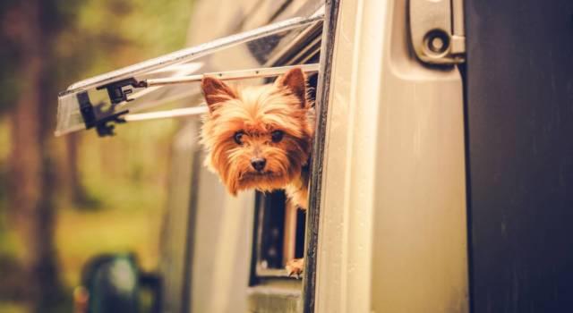 perro en caravana