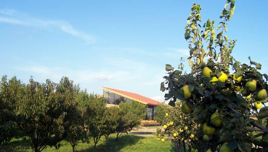 Ecocamp Vinyols arboles
