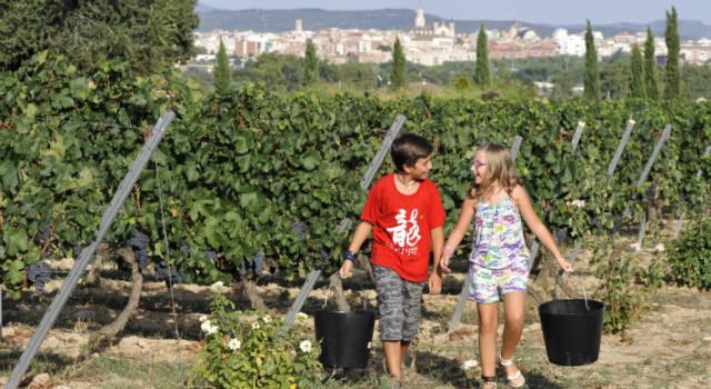 Penedes-Barcelona-enoturismo-Bodegas Torres