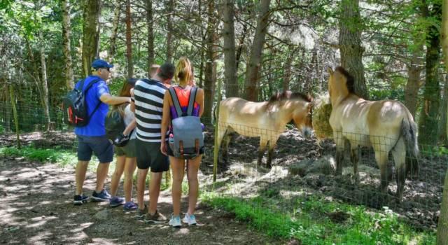 caballos lacuniacha