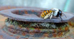 La ruta de la abeja, apta para toda la familia.