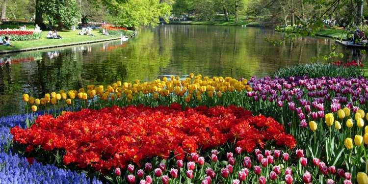 Los tulipanes, un símbolo de Holanda.