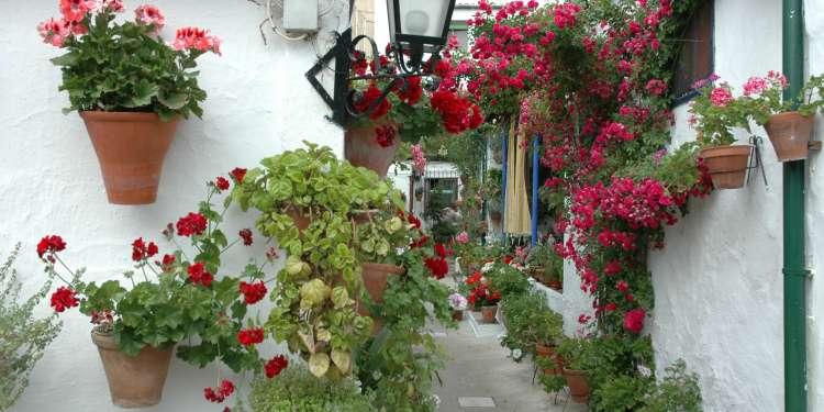 En mayo Córdoba celebra el concurso de sus patios.