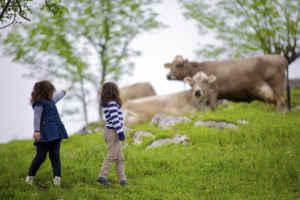 Recorre, conoce y saborea Asturias