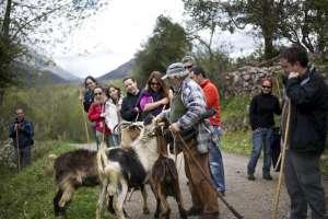 Cabras en la ruta del Queso y la Sidra. ©José Ramón Navarro Tudela. Cedida por Plan de Competitividad Gastronómica del Principado de Asturias.