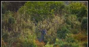 Descubre la Berrea del Ciervo