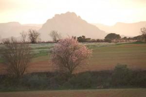 Terra Alta2