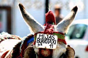 Un burrotaxi a Mijas, por favor
