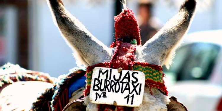 burrotaxi