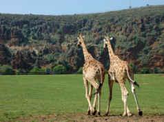 Animales y naturaleza en Cantabria
