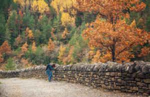 Naturaleza en estado puro en el cañón de Añisclo, Huesca