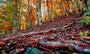 El otoño llena de color el Hayedo de Tejera Negra