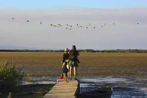 observacion aves delta ebre llacuna del garxal