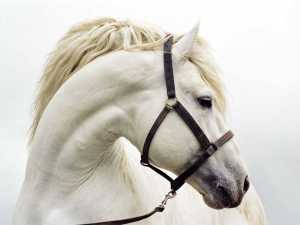 caballo-solsones