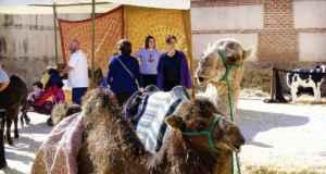 mercado-camellos-alcala
