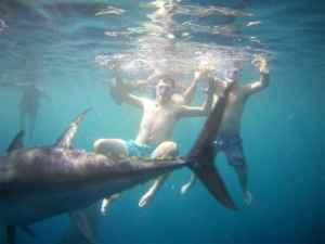 Ir de camping y nadar entre atunes, una aventura inolvidable