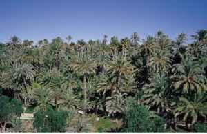 palmeral-elche